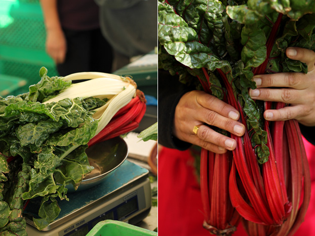 Swiss Chard in Malta