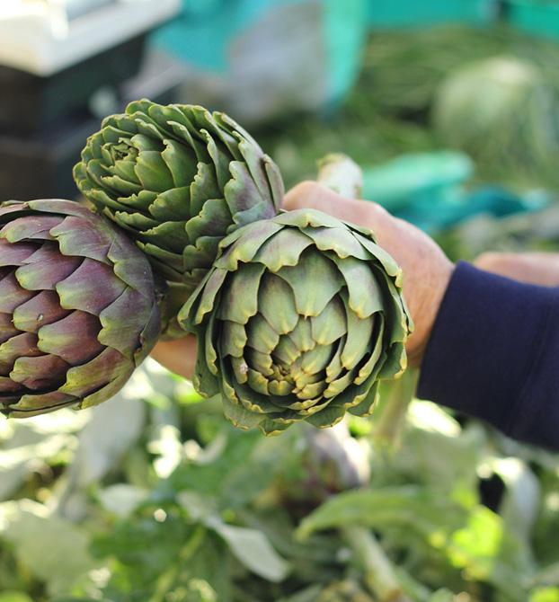 artichokes, Malta's farmers market
