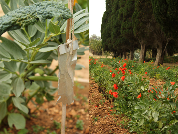 Villa Bologna, Malta vegetable garden