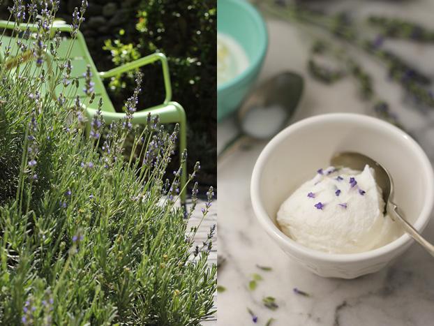 Maltese garden lavender