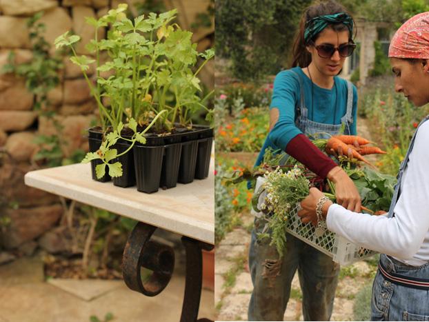 gardeners at Villa Bologna, Malta