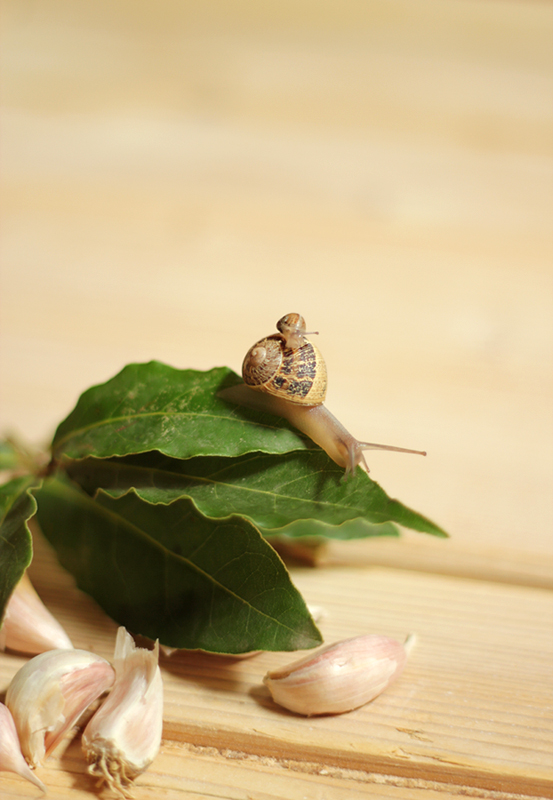 Secret Ingredients (snail & baby)